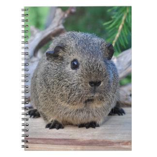 Guinea Pig Spiral Notebook