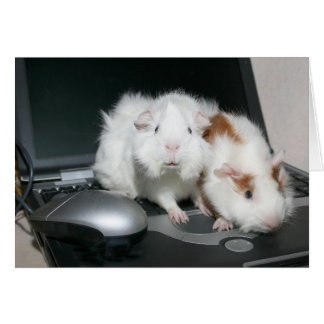 Guinea pigs and laptop card