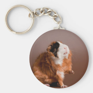 guinea pigs basic round button key ring