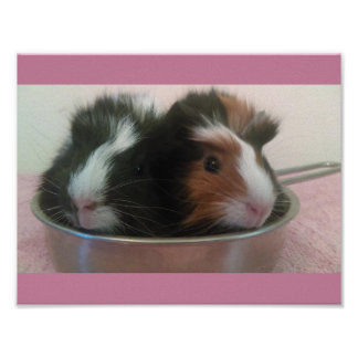 guinea pigs in toy pan poster