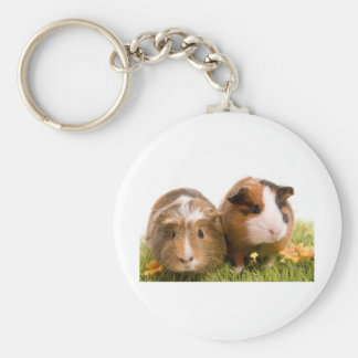 guinea pigs one has lawn basic round button key ring
