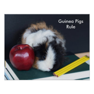 Guinea Pigs Rule Poster