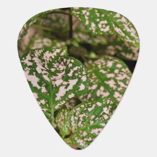 Guitar Pick - Pink Polka Dot Plant
