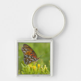 Gulf Fritillary (Agraulis vanillae) feeding on Silver-Colored Square Key Ring