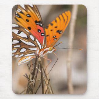 Gulf Fritillary Butterfly Mouse Pad