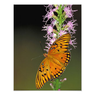 Gulf Fritillary Butterfly on Blazingstar Flower Art Photo