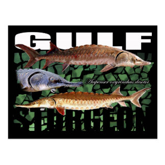 Gulf Sturgeon-Collage-Postcard Postcard