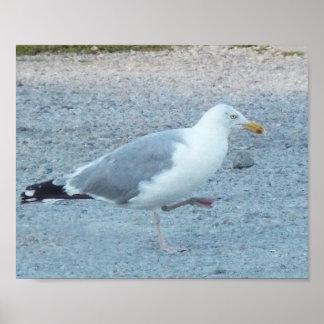 Gull at the beach  print