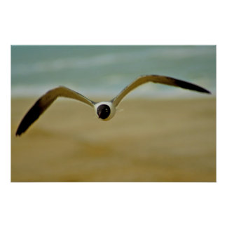 Gull Coming at Me Poster