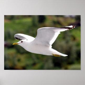 Gull in flight posters