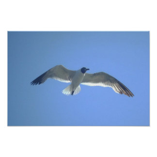 Gull in Flight Print