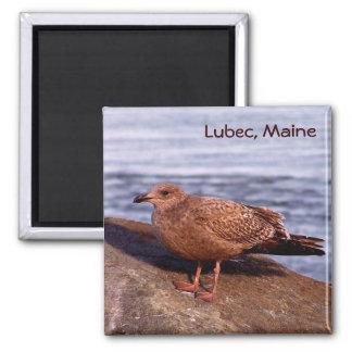 Gull in Lubec, Maine Square Magnet