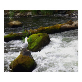 Gull in Mid Stream Print