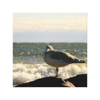 Gull Looking at YOU! Canvas Print
