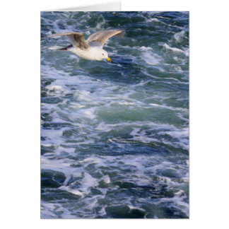 Gull on the Water Card