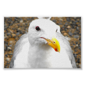 Gull Portrait Posters