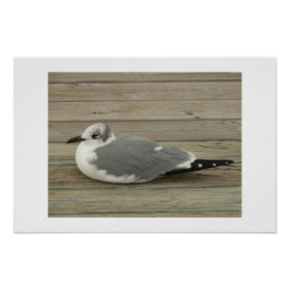 Gull Posters