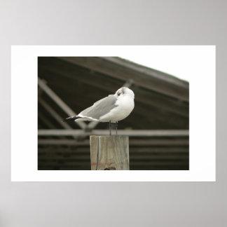 Gull. Print