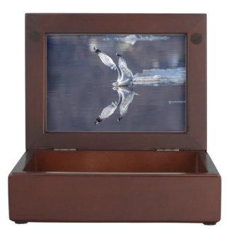 Gull Reflections Keepsake Box