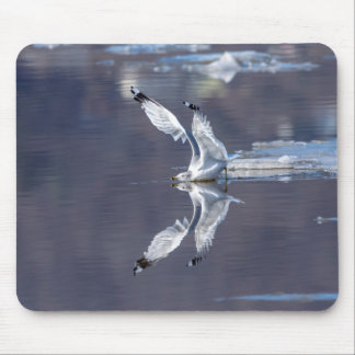 Gull Reflections Mouse Pad
