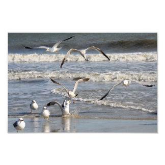 Gull time at the beach photo