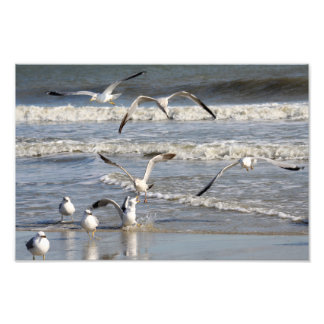 Gull time at the beach photograph