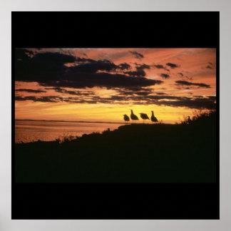 Gulls at Sunset Print
