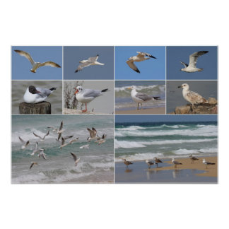 Gulls Collage Posters
