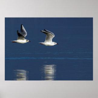 Gulls flying poster