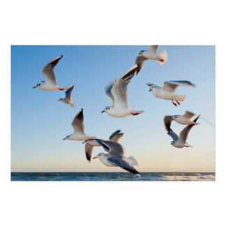 Gulls in flight posters