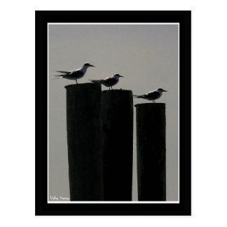 Gulls Parked Post Card