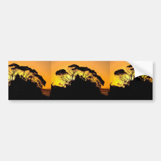 Gum Tree At Sunset, Auckland, New Zealand. The Auc Bumper Stickers