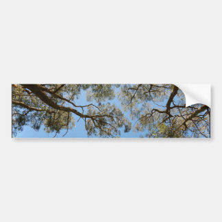 Gum Trees against a Blue sky Bumper Sticker