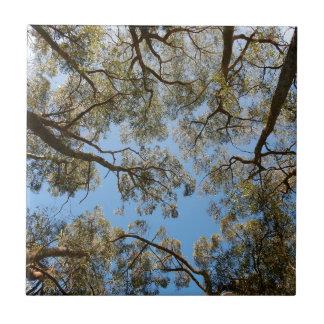 Gum Trees against a Blue sky Tile