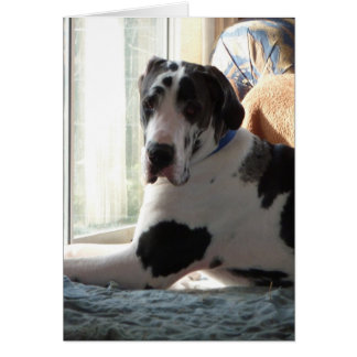 'Gunner' Harlequin Great Dane Card
