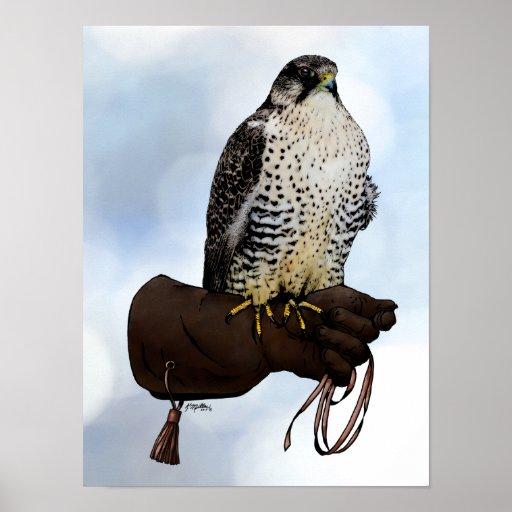 Gyrfalcon on Glove Poster