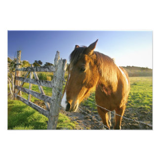 Haast, New Zealand. A horse ranch in New 2 Photo Art