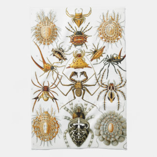 Haeckel Arachnida Tea Towel