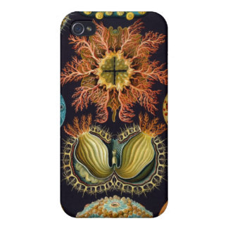 Haeckel Ascidiae multiple products selected iPhone 4/4S Cases