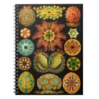 "Haeckel Ascidiae Sea Life Illustration 6.5X8.75"" Notebook"