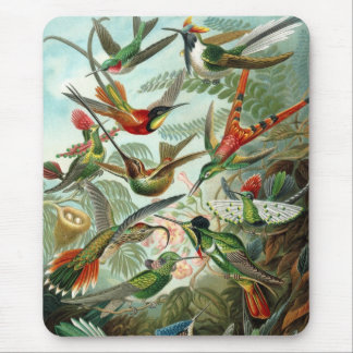 Haeckel Birds Mouse Pad