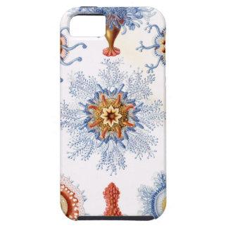 Haeckel blue iPhone 5 cases