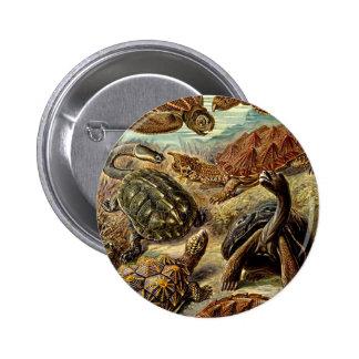 Haeckel Brown Sea Turtle Tortoise Painting Pinback Button