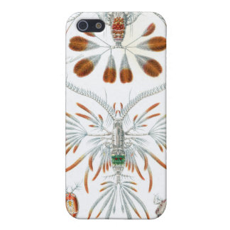 Haeckel Copepoda multiple products selected iPhone 5/5S Case