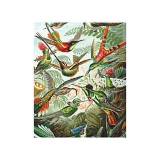 Haeckel Green Red Birds Design Canvas Print