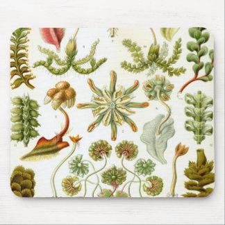 Haeckel Hepaticae Mouse Pad