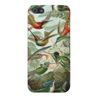 Haeckel Hummingbirds Case For iPhone 5/5S