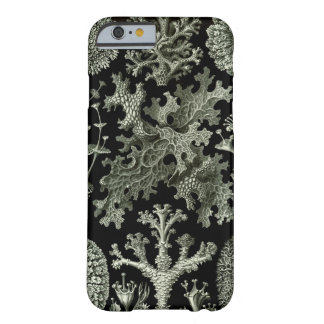 Haeckel iPhone 6 case - Lichenes