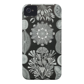 Haeckel iPhone Case - Diatomea