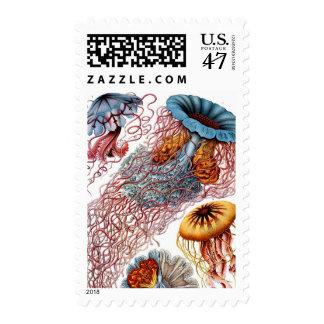 Haeckel Jellyfish Stamp